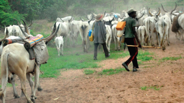On-the-move-Herdsmen-and-their-cattle-1
